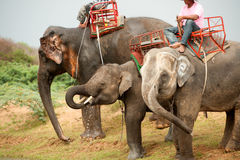 Elephant  family hapiness with water after Ordination parade on Royalty Free Stock Image