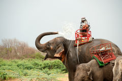 Elephant  family hapiness with water after Ordination parade on Royalty Free Stock Photo