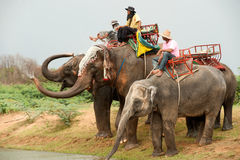 Elephant  family happiness with water after Ordination parade on Royalty Free Stock Photography
