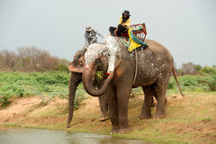 Elephant  family happiness with water after Ordination parade on Royalty Free Stock Images