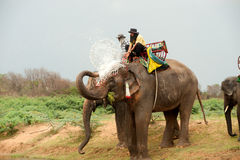 Elephant  family happiness with water after Ordination parade on Stock Photos