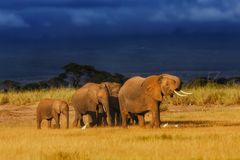 Elephant family just before the rain. In the beautiful landscape of Amboseli National Park in Kenya stock photo