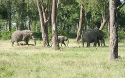 Elephant family in Kenya Stock Photo