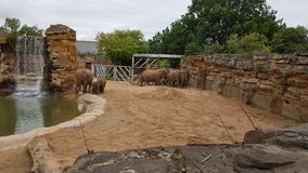 Elephant family. Elephant large family protect them Stock Photos