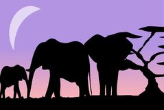 Elephant Family in the Moonshine Royalty Free Stock Images