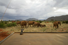 An Elephant Family. Photo from a Safari in Tsavo East National Park, Kenya stock images