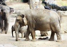 Elephant Family Stock Images