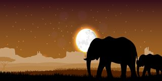 Elephant family sunset. Illustration of Elephant family sunset royalty free illustration