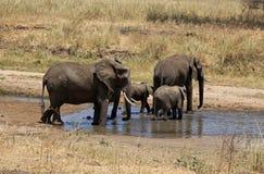 Elephant family, Tanzania. Elephant family at water hole in Tanzania Stock Photo