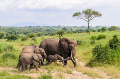 Elephant family in Tarangire Park, Tanzania Stock Images