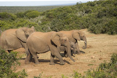 Elephant family with tiny baby at watering hole Stock Images