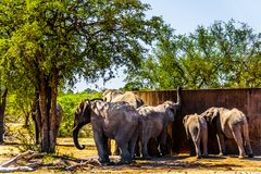 Elephant Family trying to drink from the water storage tank at Olifants Drink Gat watering hole in Kruger National Park. In South Africa Royalty Free Stock Images