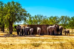 Elephant Family trying to drink from the water storage tank at Olifants Drink Gat watering hole in Kruger National Park. In South Africa Royalty Free Stock Photos