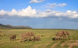 Elephant family on safari Royalty Free Stock Images