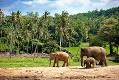 Elephant family walking towards a water hole Royalty Free Stock Photo