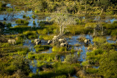 An elephant family is walking in the water. Royalty Free Stock Image