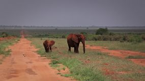 Elephant Mother and Baby in Tsavo East stock photos