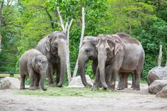 Elephant family in a Zoo of Berlin, Germany. Big Elephant family with baby elephant in a Zoo of Berlin, Germany Stock Images