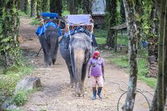 Elephant farm in the national reserve Khao Sok Thailand. 23 December 2018 royalty free stock image