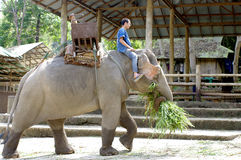 Elephant farm in northern thailand Stock Image