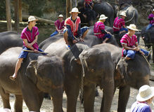 Elephant farm in northern thailand Royalty Free Stock Photo
