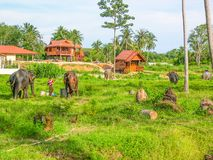 Elephant Farm in Phuket, Thailand royalty free stock photos