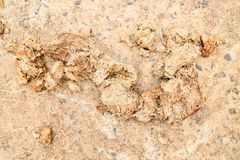 Elephant feces on the road. Elephant feces or elephant poo have a valuable in agriculture industrial, it`s fertilizer for plant or tree. In thailand country Royalty Free Stock Photo