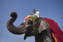 Elephant festival, Chitwan 2013, Nepal Royalty Free Stock Photography