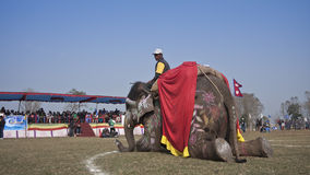 Elephant festival, Chitwan 2013, Nepal Stock Photography