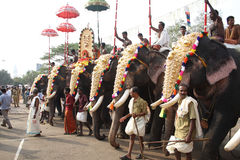 Elephant festival of Thrissur Stock Image