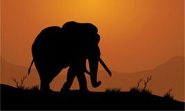 Elephant in the field of silhouette. With orange backgrounds Royalty Free Stock Photos