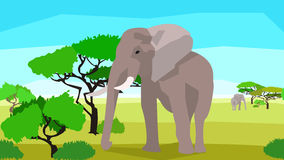 Elephant in a field with trees, seamless, animals Royalty Free Stock Photography