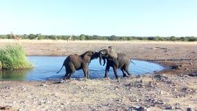 Elephant fight stock photos