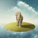 Elephant in floating grass land over the sky in imagine Royalty Free Stock Image