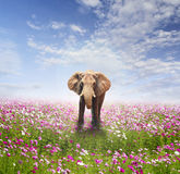 Elephant on flower field and clouds sky Stock Photography