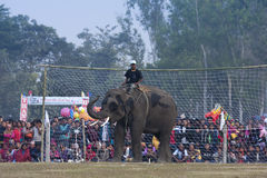 Elephant football - Elephant festival, Chitwan 2013, Nepal Royalty Free Stock Photos