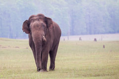 Elephant in forest Stock Photos