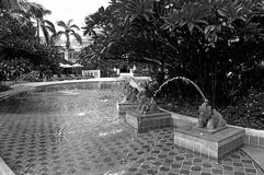 Elephant fountain pool black white Stock Photography