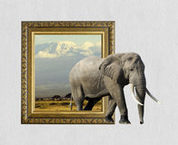 Elephant in frame with 3d effect stock images
