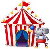 An elephant in front of the tent at the carnival Royalty Free Stock Photography