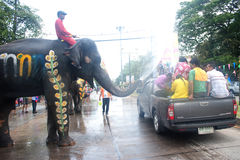 Elephant fun in water festival . Royalty Free Stock Photography