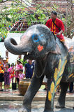 Elephant fun in water festival . Royalty Free Stock Photos