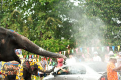 Elephant fun in water festival . Royalty Free Stock Photo