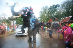 Elephant fun in water festival . Stock Images