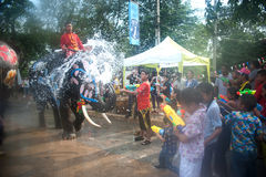 Elephant fun in water festival . AYUTTAYA, THAILAND - APRIL 14: Songkran Festival is celebrated in a traditional New Year's Day from April 13 to 15, with the Stock Photo