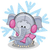 Elephant in a fur headphones Royalty Free Stock Images