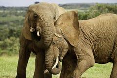 Elephant games Stock Photos