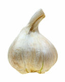 Elephant garlic bulb stock images