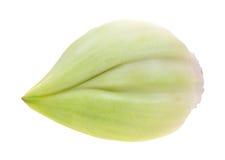 Elephant garlic clove stock images