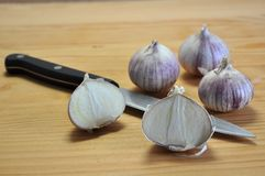 Elephant Garlic on cutting board Royalty Free Stock Images